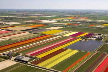 Dutch-Flower-Fields-Airiel-View